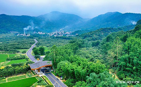 乡下乡村森林风景